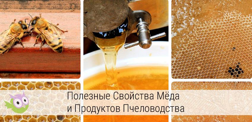 полезные свойства мёда и продуктов пчеловодства