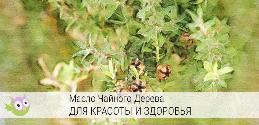 эфирное масло чайного дерева способы применения