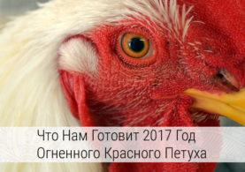 что нам готовит 2017 год огненного красного петуха