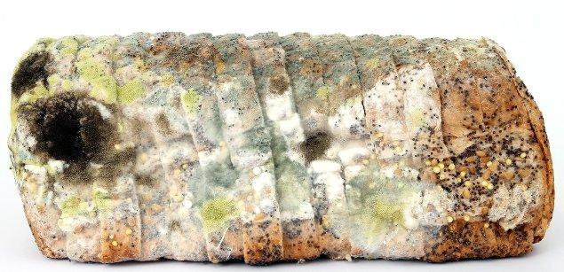 плесневелый хлеб