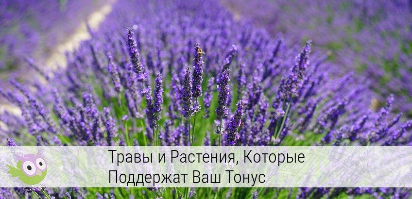 лечебные травы и растения и их применение