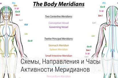 меридианы человека схема и направления