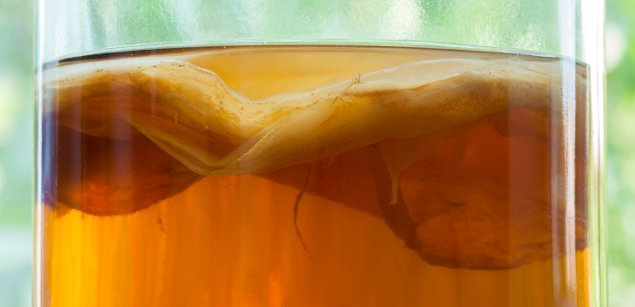 чайный гриб крупным планом