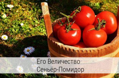помидоры польза и вред для здоровья