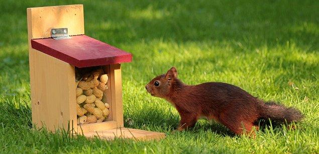 арахис и белка