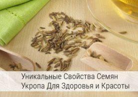 семя укропа лечебные свойства и противопоказания для женщин