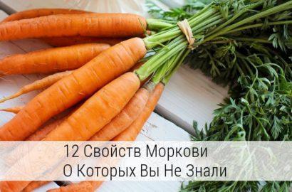 чем полезна морковь для организма человека